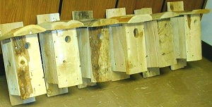 Row of Wooden Bluebird Houses